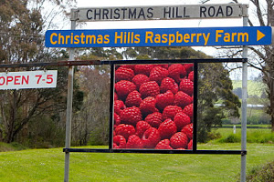 圣诞山木莓果园